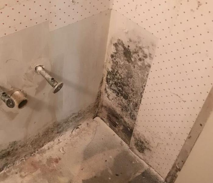 Mold discovered in a finished basement Before