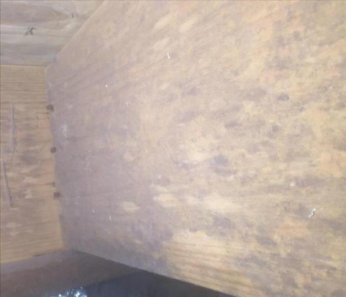 Mold Remediation Severe Mold Damage